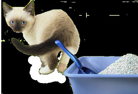 Избавляемся от запаха из кошачьего лотка