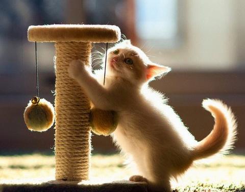 Что следует знать, если вы решили приютить брошенную кошку?